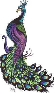 colourful drawing of peacock clipart best
