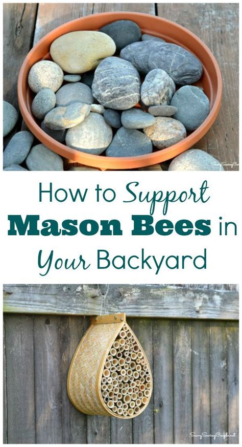 how to raise bees in your backyard bee friendly and support your local mason bee population