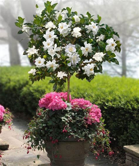 best flowers for small pots 25 best ideas about four o clock on pinterest