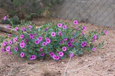 phronesisaical desert plants