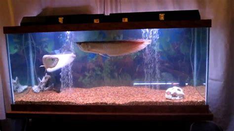 aquarium design for arowana fish tank 90 gallon aquarium full 1 65864 bytes 2017