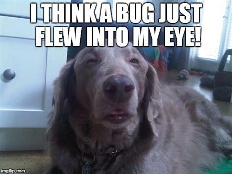 High Dog Meme - high dog memes imgflip