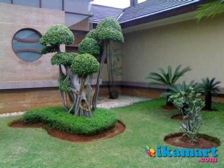 Jual Tukang Taman Hias Kaskus tukang taman pohon pelindung tanaman hias rumput gajah