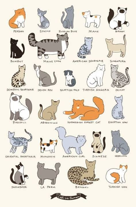 types of cats cat breeds chart cat breeds cats charts and cat breeds