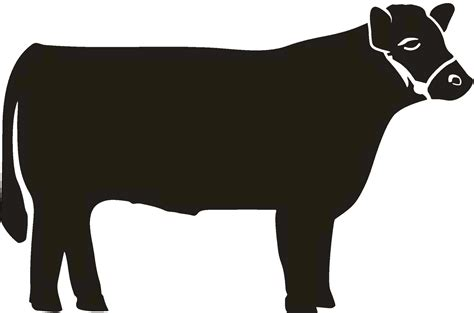 Show Heifer Outline by The Gallery For Gt Show Calf Silhouette