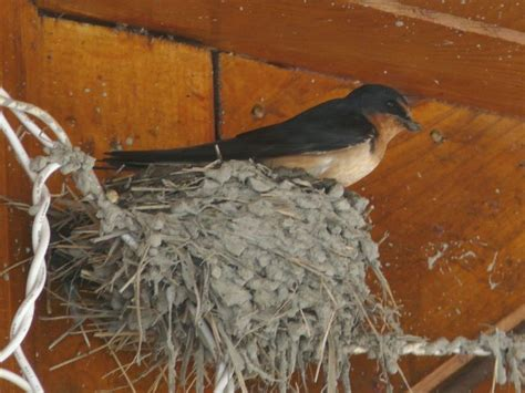 484 best images about bird nests on pinterest passerine