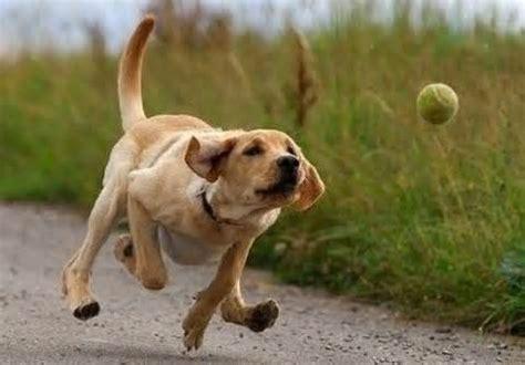 how to a to fetch fetch 의 정의 동의어 반의어 및 발음