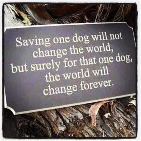 rescue quotes quotes about animal rescue quotesgram