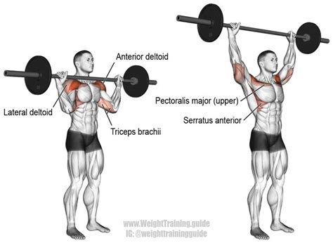 muscles used during bench press best 25 overhead press ideas on pinterest dumbbell
