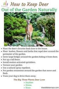 how to keep deer out of the garden naturally and easily