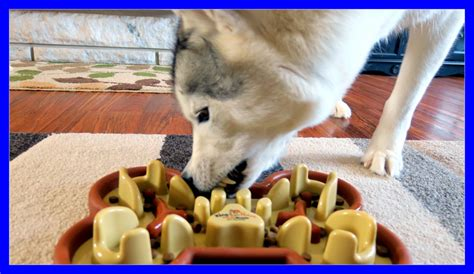 dog wont eat out of bowl tag archive for quot bowl for dog that eats too fast quot gone