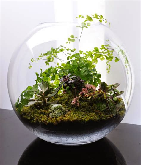 100 beautiful terrariums and tiny gardens ideal for small