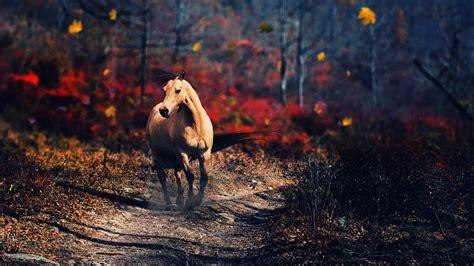 wallpaper hd 1920x1080 horses horse full hd wallpaper and background 2560x1440 id 432346