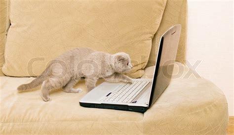 katze uriniert auf sofa katze und laptop auf dem sofa stockfoto colourbox