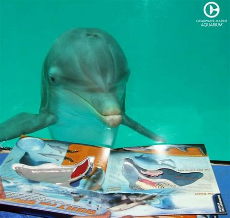 My Winter Tale 57 best winter the dolphins images on