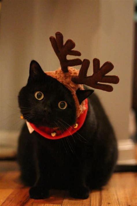 imagenes navidad gatitos mentalmente preparada para las fiestas 161 feliz tere s