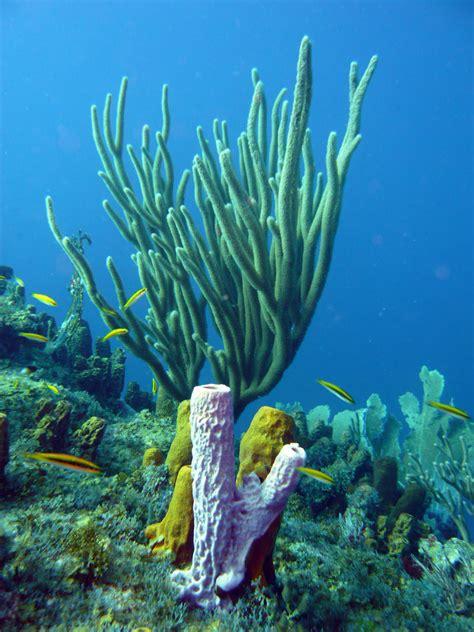 imagenes medicas en arrecifes las esponjas marinas reciclan los materiales nutritivos de