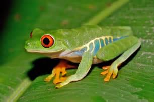 norman mcmillan tree frogs
