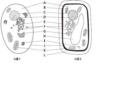 printable animal cell diagram quiz plant cell vs animal cell worksheet worksheets for all