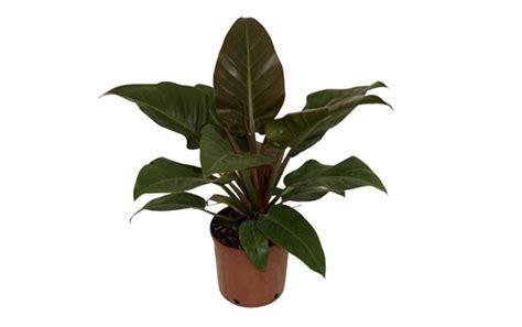 piante da appartamento poca luce piante da appartamento con poca luce piante da interno