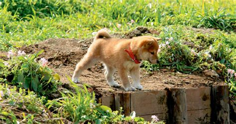 a tale of mari and three puppies a tale of mari and three puppies japan 2007