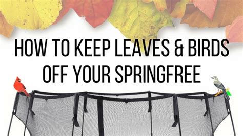 keeping your springfree troline bird leaf free