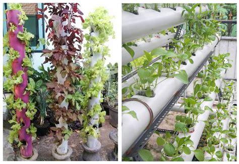 teknik   metode menanam sayur  pipa paralon