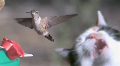 wait for it cat and hummingbird video ebaum s world