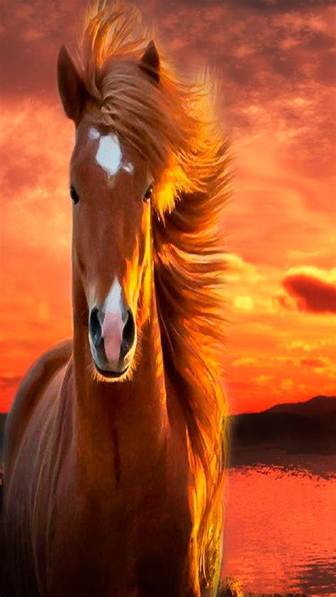 wallpapers hd fondos de pantalla de caballos varias fondos de caballos para whatsapp im 225 genes wallpappers