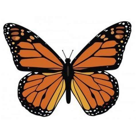 imagenes de mariposas que vuelan la mariposa monarca thinglink