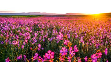 wallpaper flower field flower field flowers ideas for review