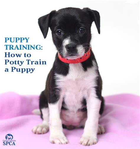how to poty a puppy how to potty a puppy