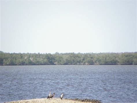 ten thousand islands boat tour 10000 islands boat tour picture of everglades national