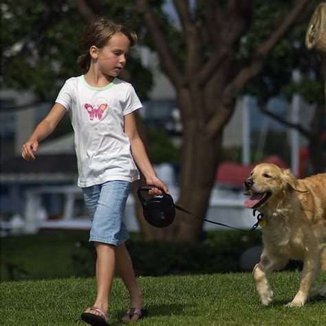 why golden retrievers are the best 12 reasons why a golden retriever makes the best family show