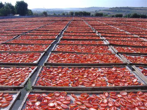 cucinare i pomodori secchi curiosit 224