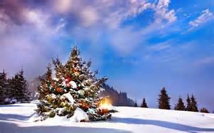 weihnachtsbaum drau 223 en im schnee hd hintergrundbilder