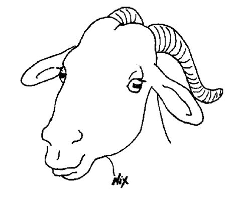 boer goat coloring page boer goat head drawing