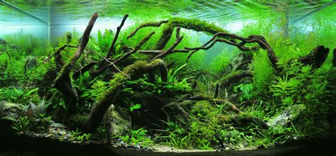 Aquascaping Techniques File Nature Style Aquascape Png Wikimedia Commons