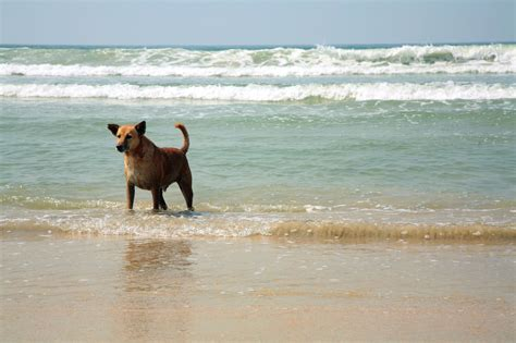 beaches that allow dogs these friendly beaches welcome your friends
