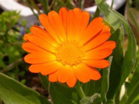 vendita piante da giardino on line faretti esterni da parete