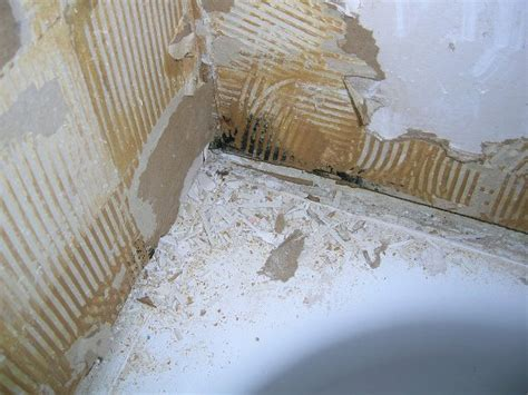 mold inspection before buying a house should i buy a house that has mold 28 images how to get rid of mold in the