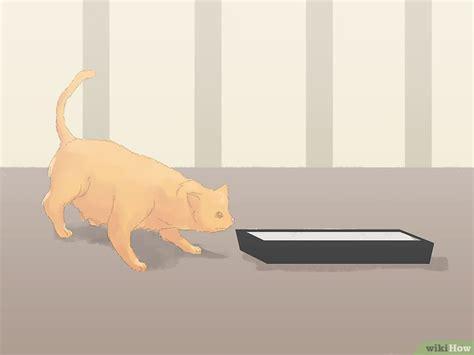 stop cat from on rug katten laten stoppen met plassen op het tapijt wikihow