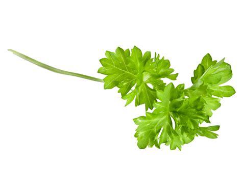 pete parsley