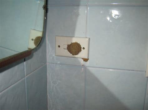 termites in bathroom termites and electricity 171 conquer termites brisbane s
