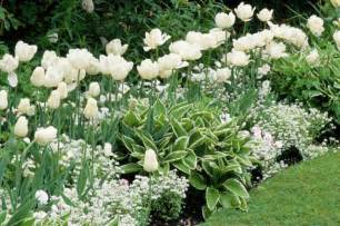 a white border idea for your garden