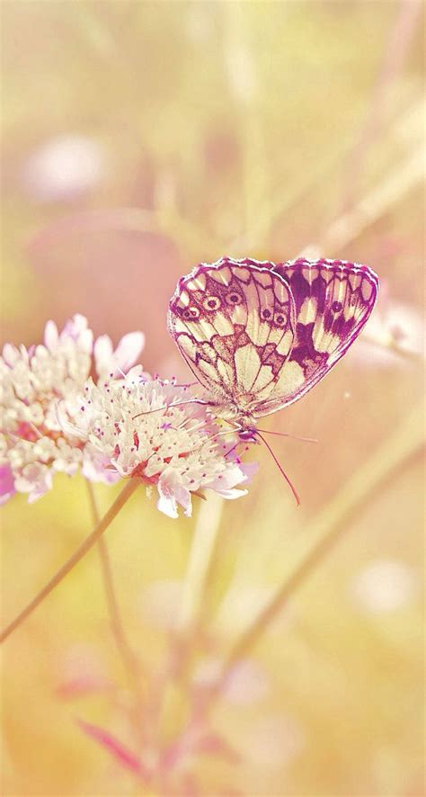 30 colorful butterfly wallpapers free to download 30 colorful butterfly wallpapers free to download
