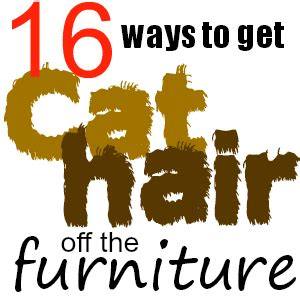 how to get cat hair off couch sixteen ways to get cat hair off furniture clothing and
