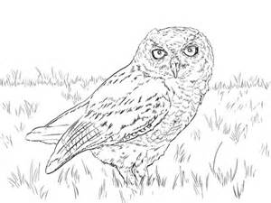 screech owl coloring page western screech owl coloring page free printable