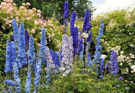 piante fiori da giardino fiori da giardino perenni giardinaggio coltivare fiori
