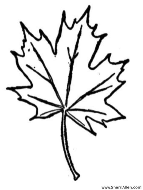 maple leaf coloring page free free coloring pages of leaf maple